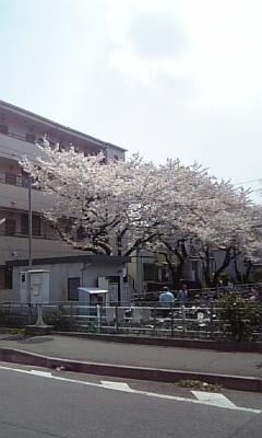 ☆駅までの道のりにて☆画像