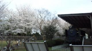 ☆桜とSL☆画像