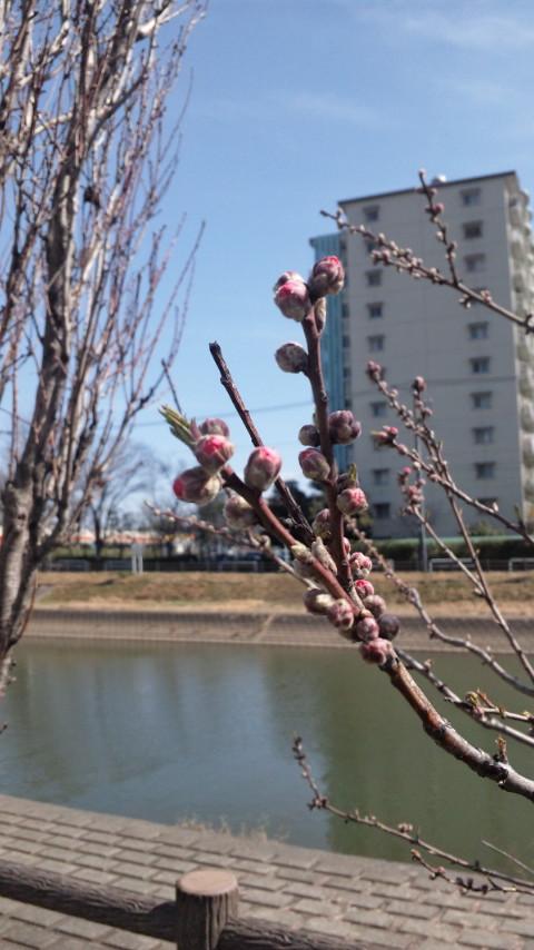 ☆小さい春、見つけた☆画像