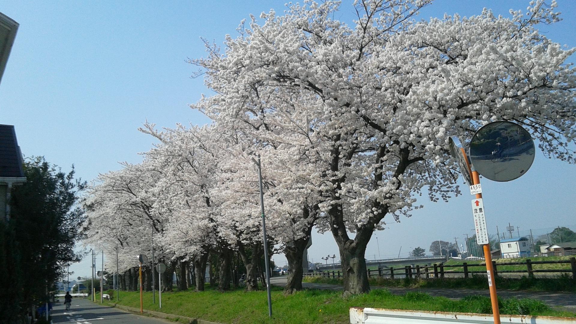 「花満開」画像