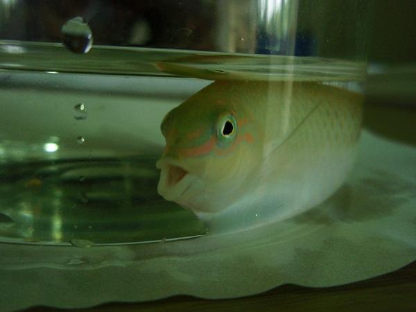 ぎょぎょぎょ(魚魚魚)の話画像
