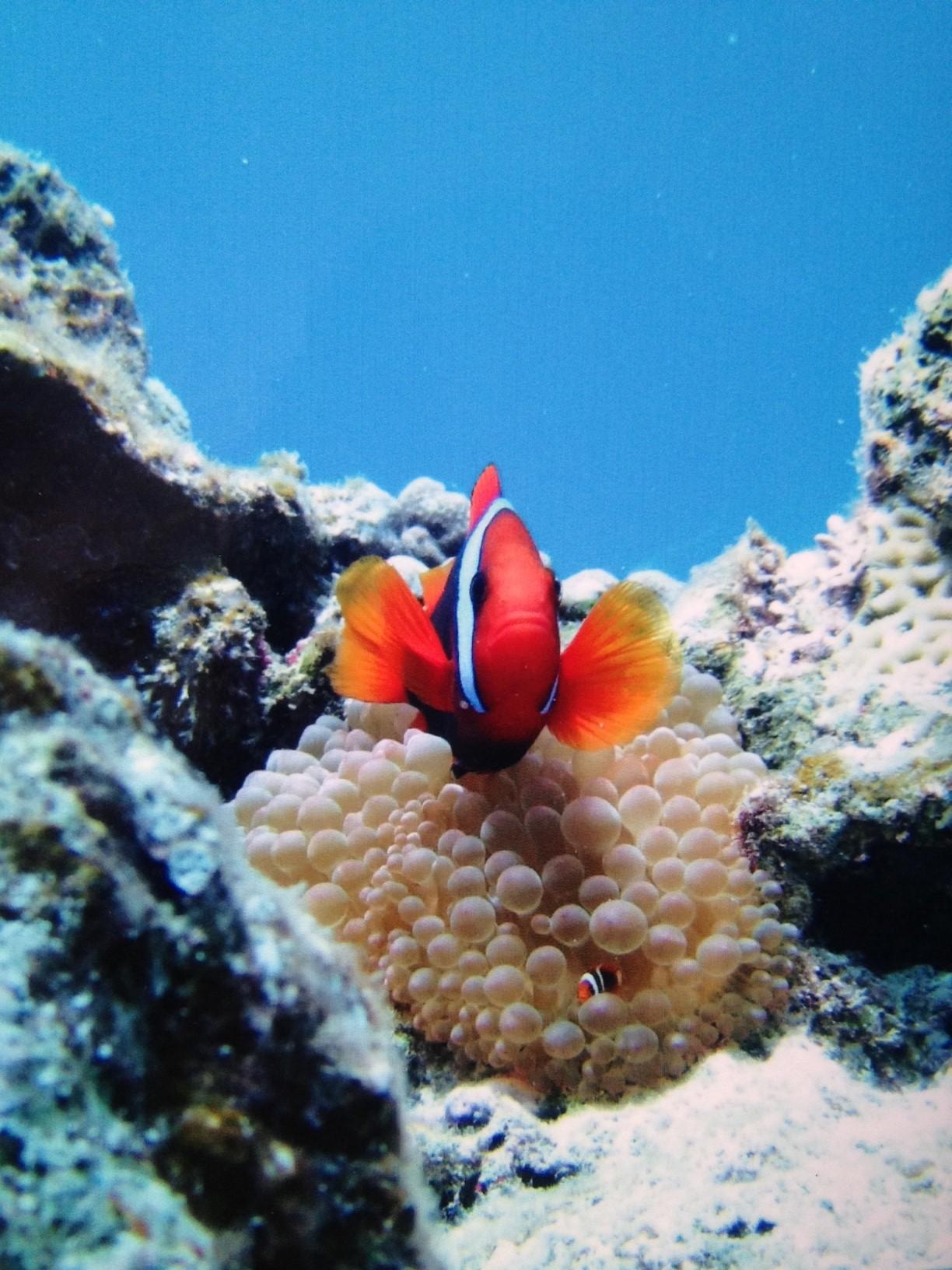 魚魚魚の話---パート2---画像